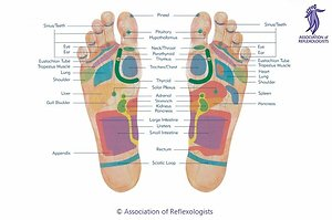 Reflexology. Footmap AoR
